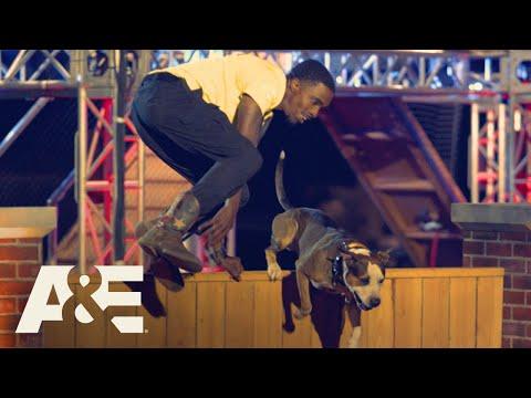 Rocko the Pit Bull Wins Fastest Run of the Night | America's Top Dog (Season 1) | A&E
