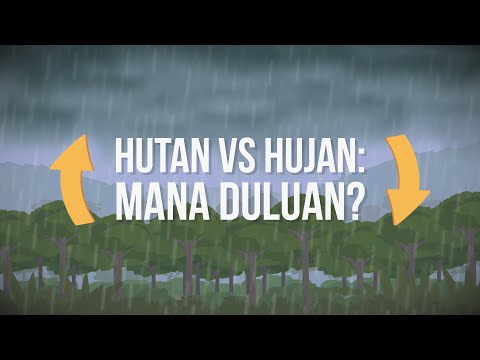 Mana Duluan Ada: Hutan atau Hujan?