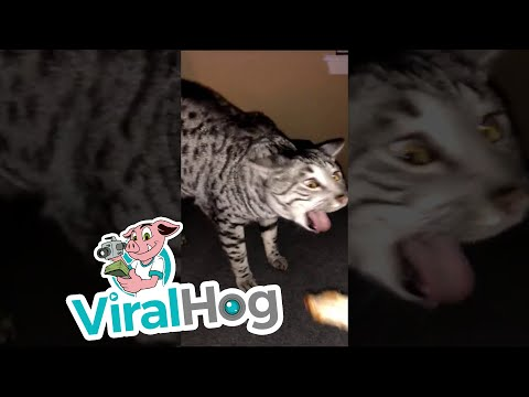 Cat Gagging Compilation || ViralHog