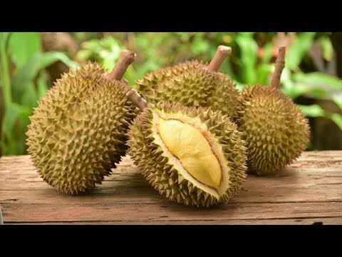 Dieta - Os 10 Benefícios da Durian Para Saúde  Dicas de Saúde