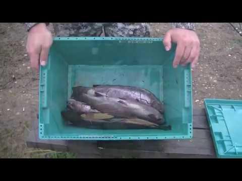 Видео отчеты рыбаков за 4 ноября 2019