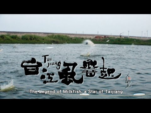 【Taijiang】The legend of milkfish, a star of Taijiang (English Ver. 30 Seconds)