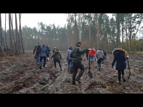 Wideo1: Dęby na stulecie Powstania Wielkopolskiego
