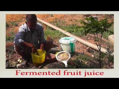 Natural Farming-How to Prepare Fermented Fruit Juice!