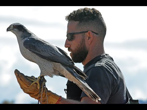 - Get a 5% discount on all Falconry...