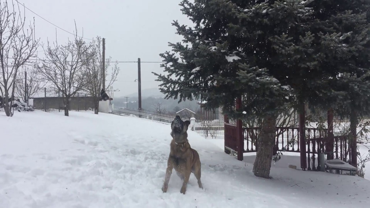 Παιχνίδια στο χιόνι για τον Κίκο