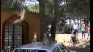 America's Funniest Home Videos - Nhung clip hai hay nhat - tap 40