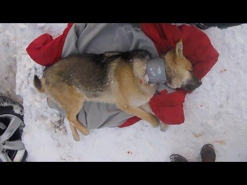 ratowanie-psa-ktory-od-szczeniaka-nosil-na-szyi-plastikowa-rure