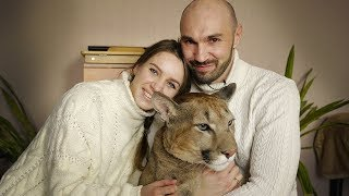 Couple Share Studio Flat With A Cougar: BEAST BUDDIES by Barcroft Animals