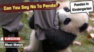 Nie jest łatwo być opiekunem pandy w zoo
