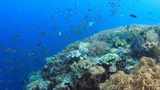 Nonton  Chasing Coral  Tracks Tragedy Of Climate Change In Oceans Film Subtitle Indonesia Streaming Movie Download