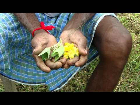 Pankaj Oudhia's Healing Herbs: Diabetes mellitus Type 2 with Cardiac Asthma. HF-206