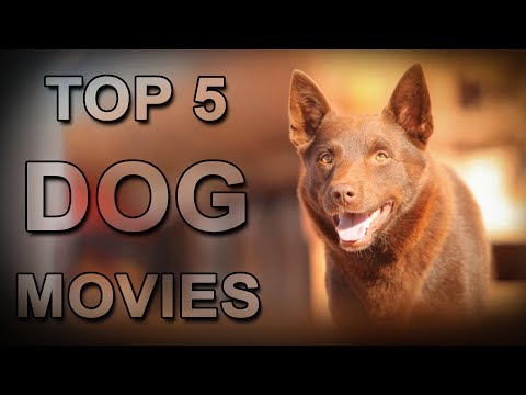 Top 5 Dog Movies That  Will Make You Cry