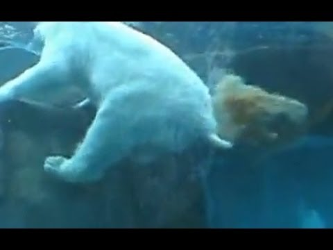 Polar Bear Poops & Penguin Farts