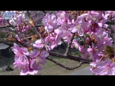 春到来を告げるアーチ 洲本・宇原