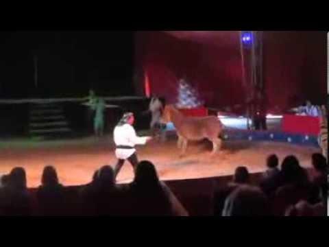 Circo Martin, dolore e umiliazione