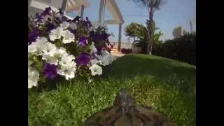 Turtlecam Is The Cam You Need To Experience