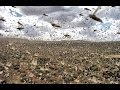 SWARMS OF MILLIONS OF LOCUST PLAGUE ...