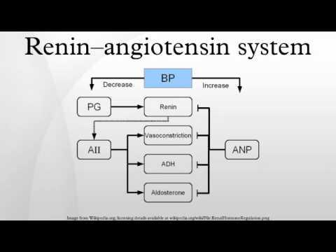 Renin–angiotensin system