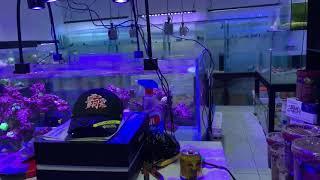 Bể cá cảnh biển Nano, Bể san hô SPS đang chạy nước