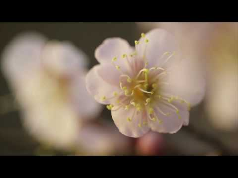 GReeeeN「キミマツ」ミュージック・ビデオ (Short ver.)