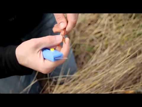Μπόλιασμα - Διαδικασία μπολιάσματος γκορτσιάς σε αχλαδιά.