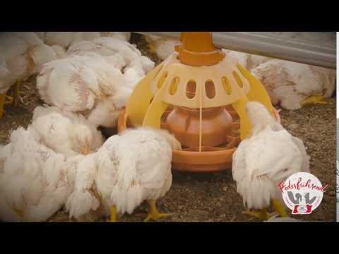 Das Futtermittel - Futterschale