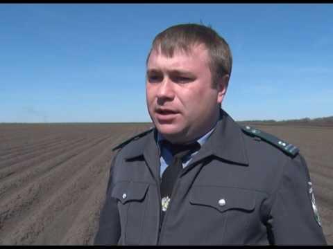 Проверка семенного картофеля в Ростовской области
