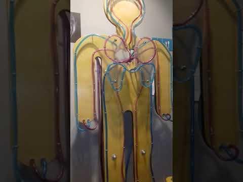 Внутри человека (видео)