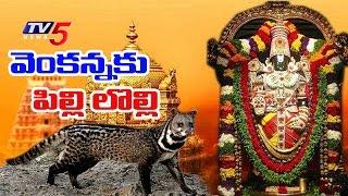 వెంకన్నకు పునుగు పిల్లుల సమస్య   TTD Plans Civet Cat Zoo   Telugu News   TV5 News