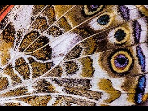 ABSTRACT MACRO PHOTOGRAPHY TIPS - Amazing Butterfly Wings