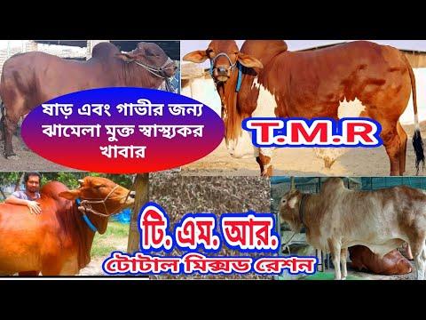 টি. এম.আর.(টোটাল মিক্সড রেশন) T.M.R(Total mixed ration)