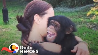 When You Just Can't Stop Rescuing Chimpanzees | The Dodo Heroes by The Dodo