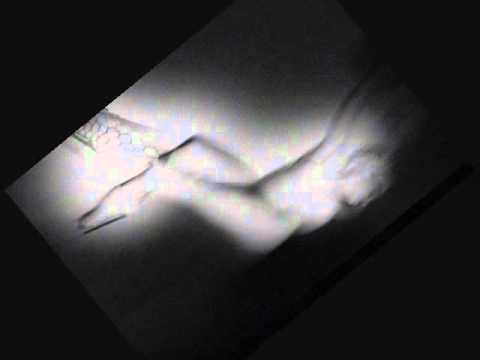 Etant Donnes + Genesis P-Orridge - At Last