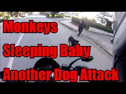 Another Dog Attack, Monkeys And Sleeping Baby.