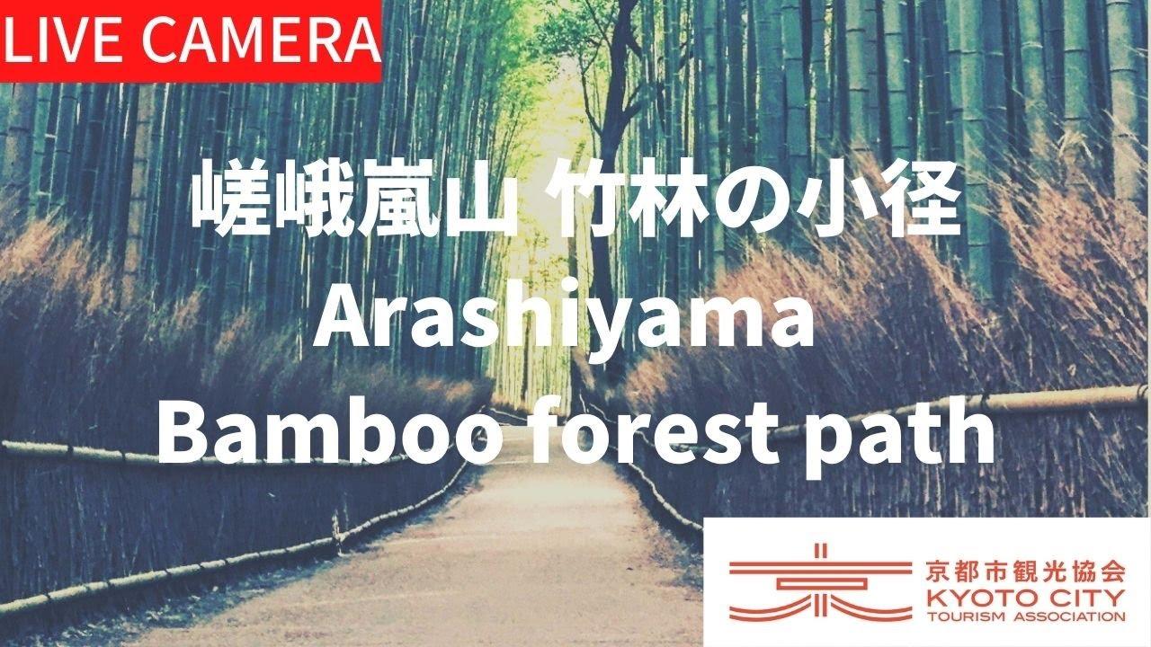 和の雰囲気が感じられる人気スポット京都【竹林の小径】 Kyoto Live camera