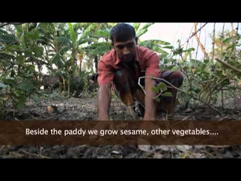 Earth Focus Episode 37 – Exposed: The Ugly Side of Food Production