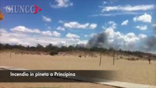 Principina a Mare Italy  city photo : PRINCIPINA A MARE - Incendio in pineta
