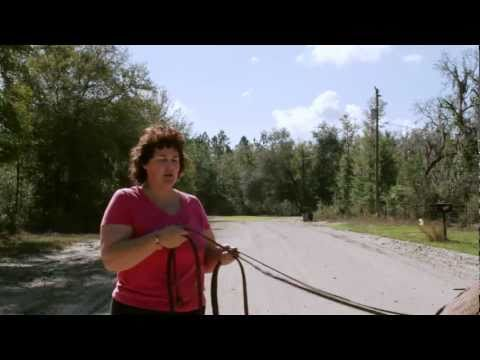 Donkey - In this episode Becky shows you how to harness up a donkey or horse, she talks about all the parts of a harness, and then shows you how to teach a donkey or ...