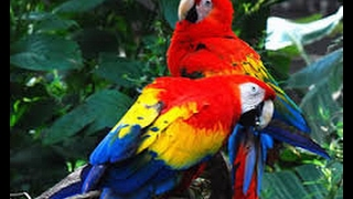 Brightly Coloured Scarlet Macaws At Bannerghatta Zoo