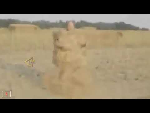 5 TIMES SPONGEBOB CAUGHT ON CAMERA SPOTTED IN REAL LIFE!