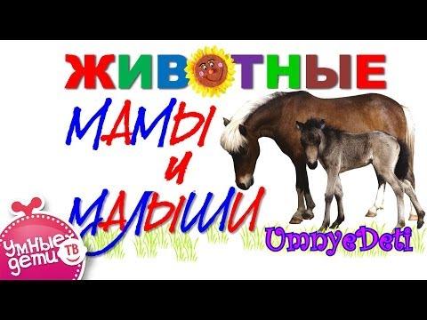 Для детей животные мамы и малыши
