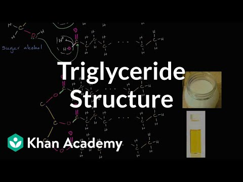 Molecular structure of triglycerides (fats) (video) | Khan Academy