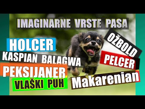 Funny face - Rase Pasa Koje Zvuče da Postoje a nisu - Face i Imena se Slažu - Fake Dog Breeds - Funny