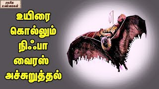 Bat Is The Only Reason For Nipah Virus || Unknown Facts Tamil