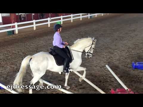 Cavaletti Training in bent and straight lines