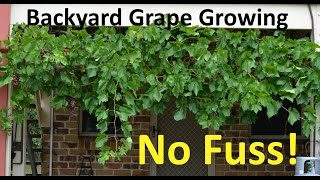 This video shows how easy it is to grow a grape vine in your backyard and even off your house! Plus we cover pruning and propagation of new plants from ...