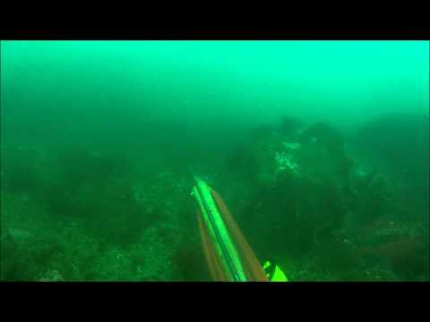 spearfishing black sea bass in RI.wmv