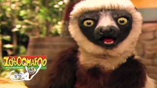 🐧 Zoboomafoo 134 - Water Creatures | National Penguin Day Special | Full Episode🐧