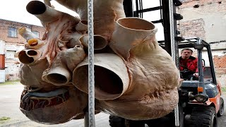BIGGEST Animal Organs and Body Parts! by Epic Wildlife